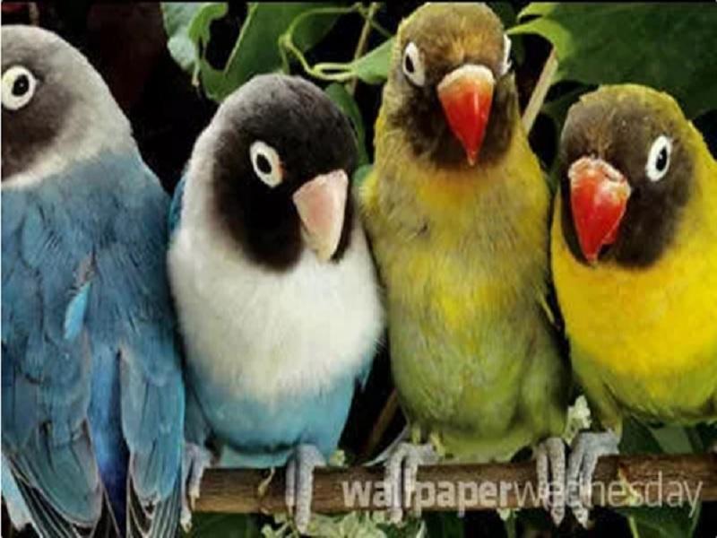 Wallpaper Burung Yang Indah