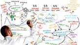 Cara Ampuh Menjadi Marketing Profesional